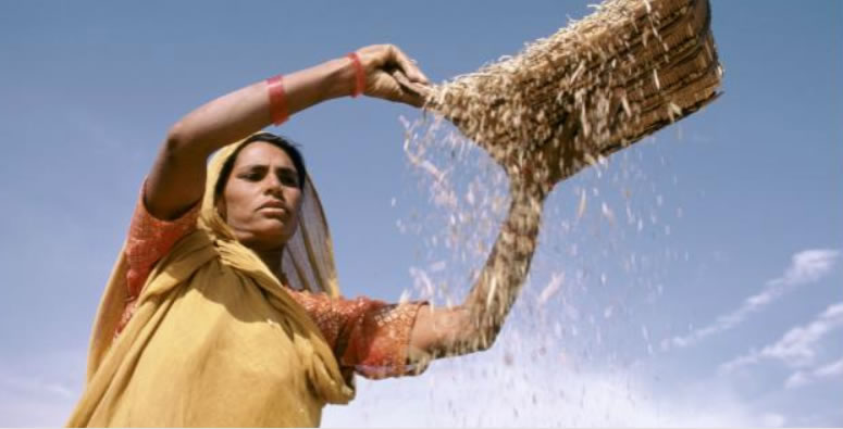 The Importance of Fertilizer to the Woman in Agribusiness