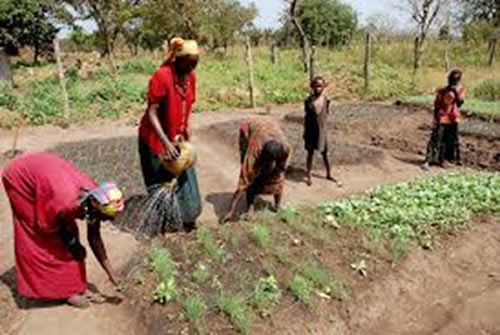 UN Women Executive Director visits Senegal to put women farmers at the heart of the gender equality agenda