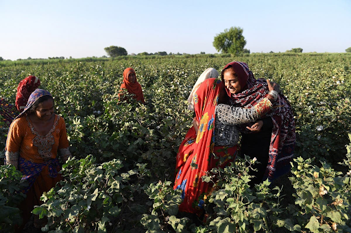 Pakistan: Speakers Demand Implementation of Women Agricultural Workers Law