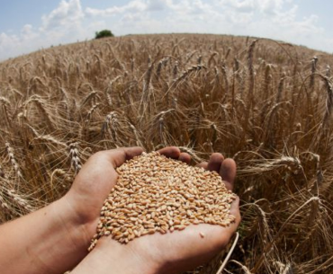 'Gender Discrimination Can Affect Crop Yields'- Research Reveals